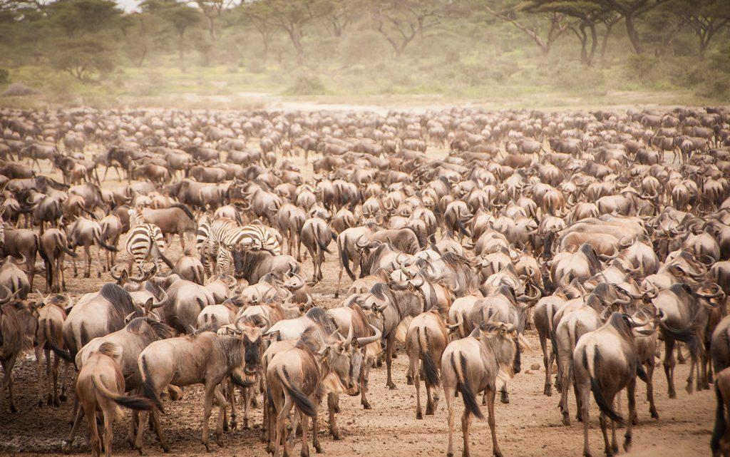 Les différentes randonnées à faire au Kenya pour un écotourisme parfait