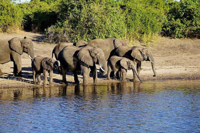 Visiter des sites naturels intéressants pour enrichir un safari au Botswana