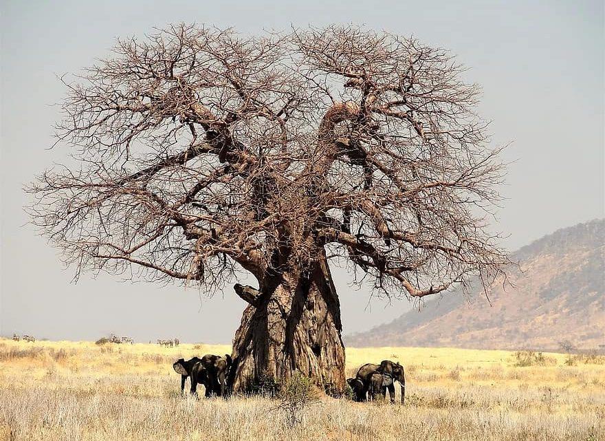 Visite de la Tanzanie, les choses à savoir pour réussir son séjour