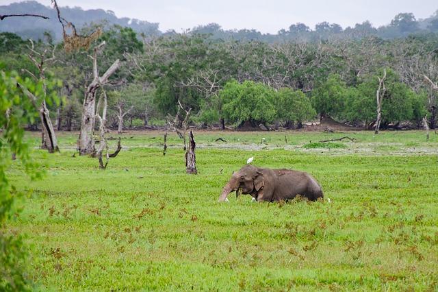 Séjour au Sri Lanka : top 3 des parcs nationaux à découvrir
